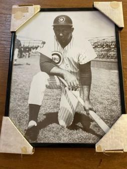 Ron Santo 14 X 11 Framed Picture Chicago Cubs